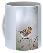Irruptive Bird Common Redpoll Coffee Mug