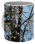 It's Spring 2013 Coffee Mug