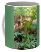 Jack-in-the-pulpit Arisaema Triphyllum Coffee Mug