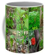 Jack-in-the-pulpit Wildflower    Arisaema Triphyllum Coffee Mug