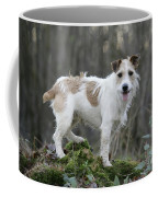 Jack Russell Dog In Autumn Setting Coffee Mug