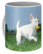 Jack Russell Terrier Dog Coffee Mug