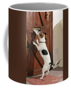 Jack Russell Terrier Gets Paper Coffee Mug