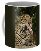Jaguar Panthera Onca Licking Its Paw Coffee Mug
