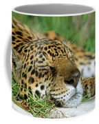 Jaguar Resting Coffee Mug