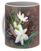 January 2014 Paper-whites In Bloom Coffee Mug