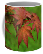 Japanese Maple Autumn Colors Coffee Mug
