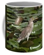 Javan Pond Heron Dthn0071 Coffee Mug