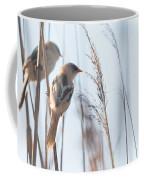jn01 Bearded Reedling Juvenile Coffee Mug