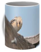 jn18 Bearded Reedling Juvenile Coffee Mug