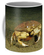 Jonah Crab Coffee Mug