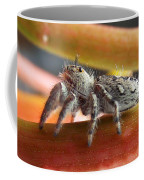 Jumper Spider Coffee Mug