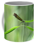 June Damselfly  Coffee Mug