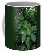 jungle in La Amistad National Park Panama 4 Coffee Mug