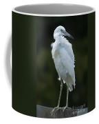 Juvenile Little Blue Heron On Sign Coffee Mug