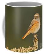 Juvenile Redstart Phoenicurus Phoenicurus Coffee Mug