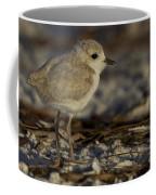 Juvenile Snowy Plover Photo Coffee Mug