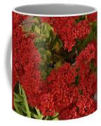 Kalanchoe Flowers Coffee Mug