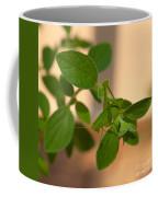 Katydid On Oregano Coffee Mug