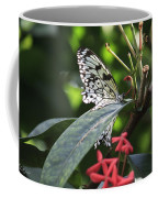 Key West Butterfly Conservatory - Idea Leuconoe Coffee Mug