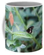 Key West Butterfly Conservatory - In Black White And Orange Coffee Mug