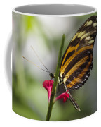 Key West Butterfly Conservatory - Papilio Zagreus Coffee Mug