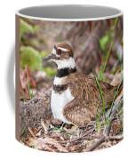 Killdeer And Young Coffee Mug