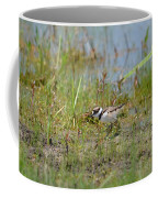 Killdeer Hatchling Coffee Mug