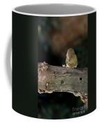 Kinglet On The Feed Coffee Mug