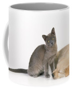 Kitten And Puppy Lying Together Coffee Mug