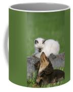 Kitten And Puppy Playing Coffee Mug