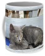 Kitten In Hydra Island Coffee Mug