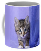 Kitten With A Curtain Coffee Mug