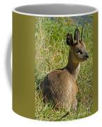 Klipspringer Antelope Coffee Mug