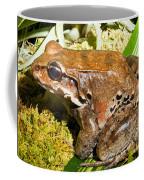Knudsen Thin Toed Frog Coffee Mug
