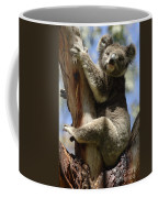 Koala Coffee Mug by Bob Christopher