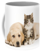 Labrador And Forest Cat Coffee Mug by Jean-Michel Labat