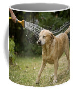Labrador Playing In Water Coffee Mug