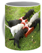 Labrador Puppies Eating Coffee Mug