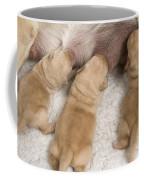 Labrador Puppies Suckling Coffee Mug