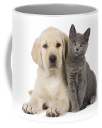 Labrador Puppy With Chartreux Kitten Coffee Mug