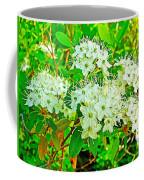 Labrador Tea In Sawtooth National Recreation Area-idaho  Coffee Mug