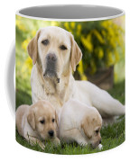 Labrador With Two Puppies Coffee Mug
