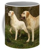 Labradors Coffee Mug