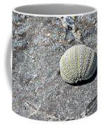 Lacy Shell On A Beachrock Coffee Mug