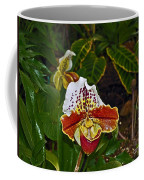 Lady Slipper Orchid Coffee Mug
