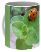 Ladybug And Oregano Coffee Mug