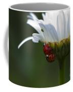 Ladybugs On Shasta Daisy Coffee Mug
