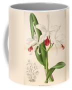 Laelia Elegans Coffee Mug by Philip Ralley