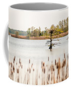 Lake Mattamuskeet Nature Trees And Lants In Spring Time  Coffee Mug